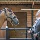 Manager führt Pferd
