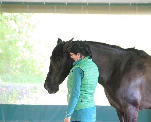 Pferde als Co-Trainer für Führungskräfte