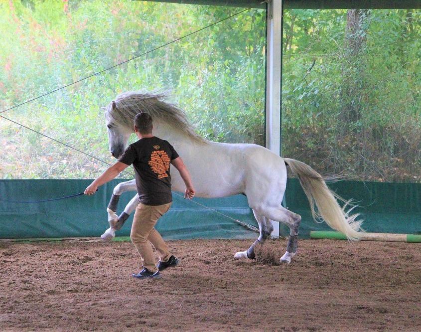 Führungskraft trainiert mit einem Pferd